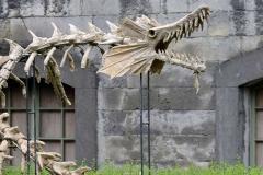 Sea dragon skeleton