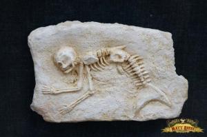 Mermaid Fossil